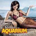 Gatlinburg Aquarium Mermaid Dive Show